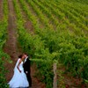Bride and groom kissing amongst the vineyards.