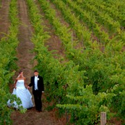 Bride and Groom in the Vineyards.